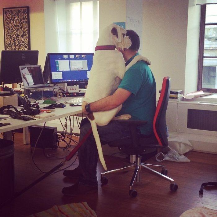 El gerente trajo hoy a su perro a la oficina. Se sentaron así