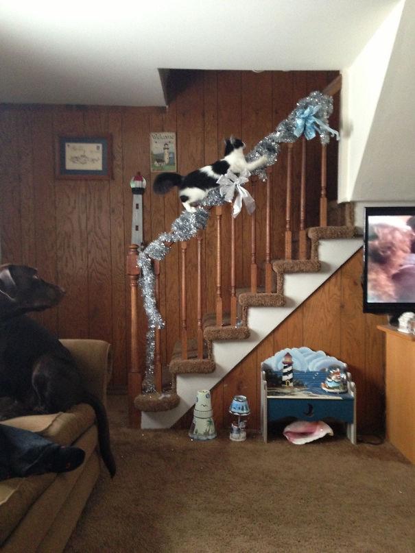 The Cat Got Catnip For Christmas, She's So High