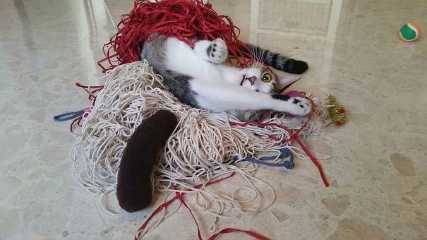 Cat's Been Hitting The Catnip Too Hard Lately
