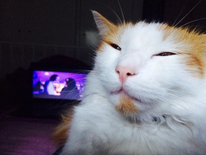 Mi gato colocadísimo