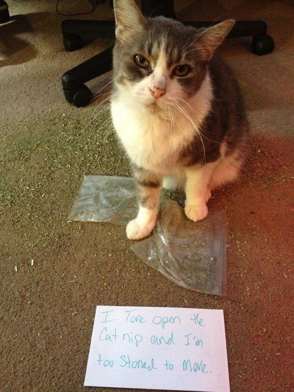 Cat Shaming: Drug Edition