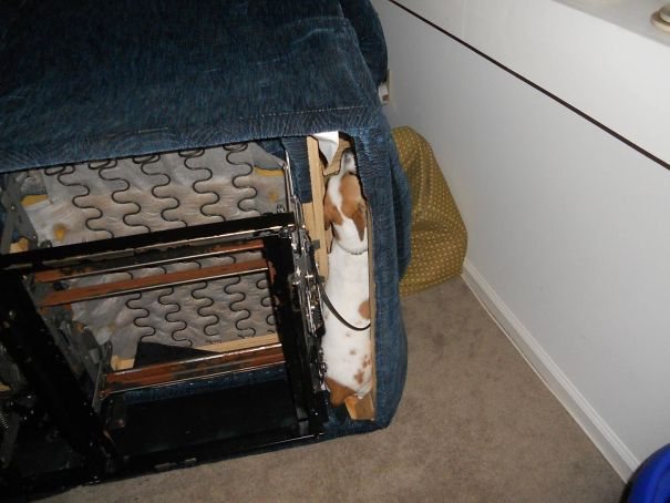 Our Dog Was Hiding Under The Sofa, So We Had To Turn It On It's Side To Stop Her. Shortly After, We Found Her Like This
