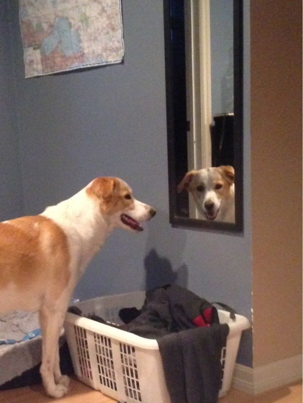 My Dog Likes To Stare At Me Through Mirrors