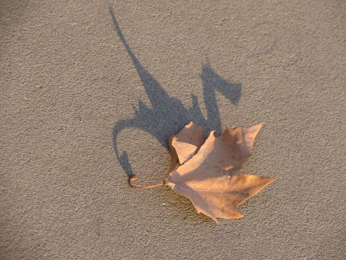 La sombra de esta hoja parece un dragón