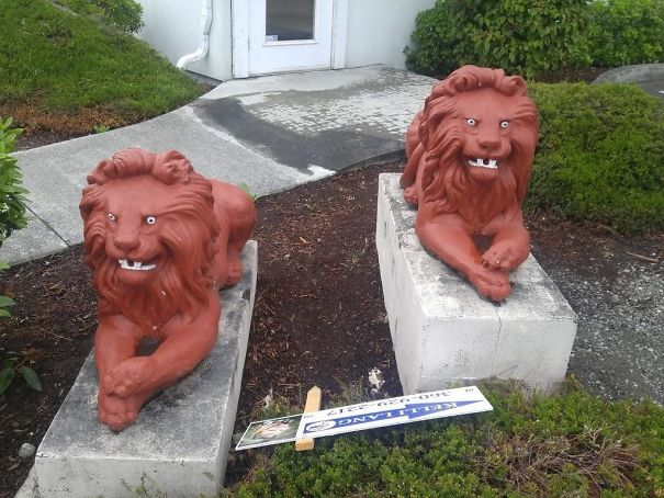 These Two Red Lions Have Seen Some Shit