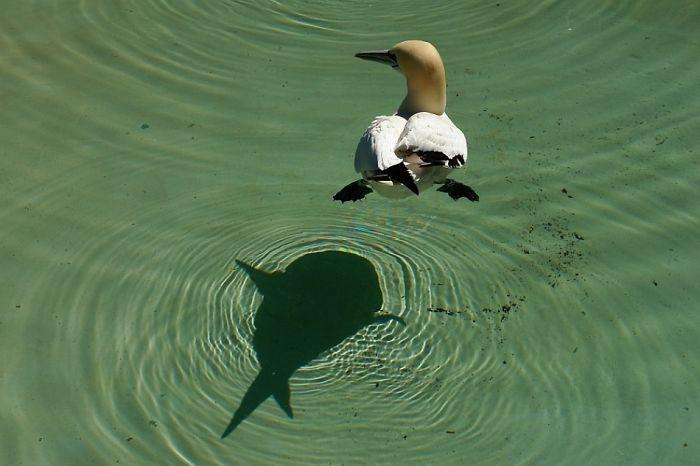 Sombra de pájaro que parece un pez