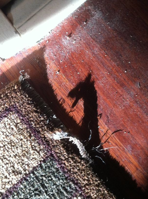 My Frayed Carpet's Shadow Looks Like A Dragon