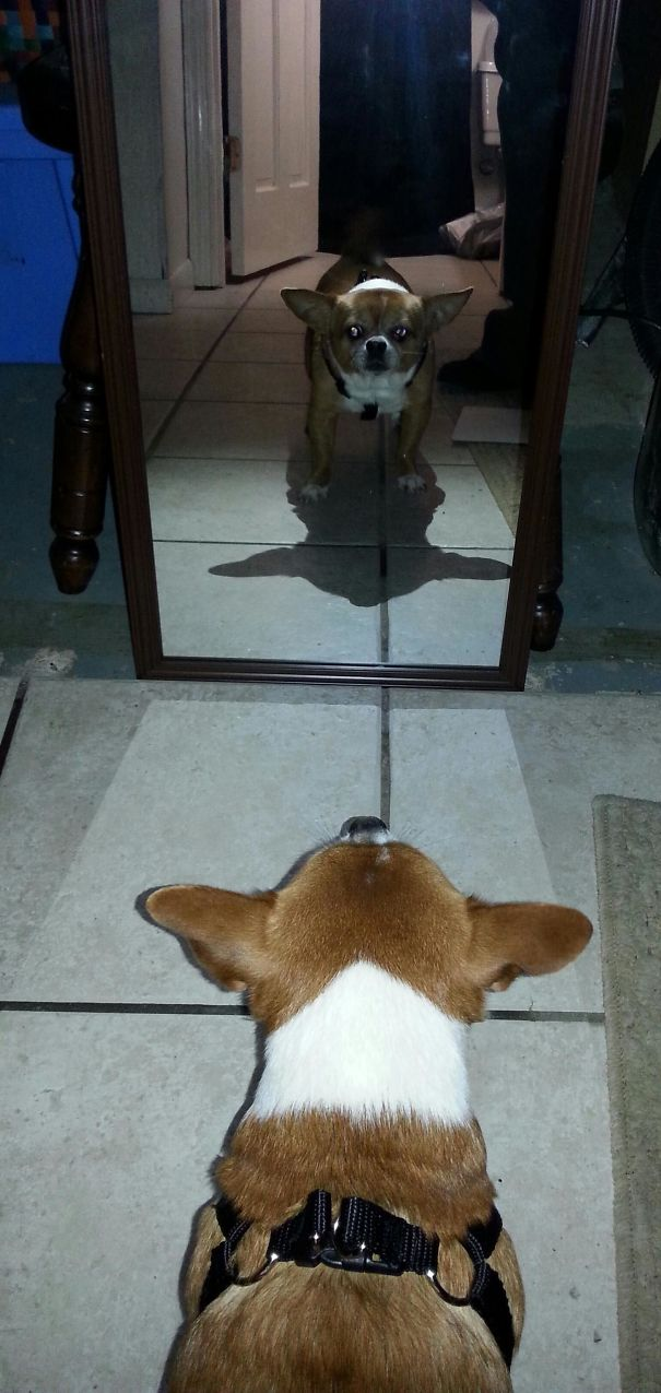 My Doggo's Shadow Looks Like Yoda