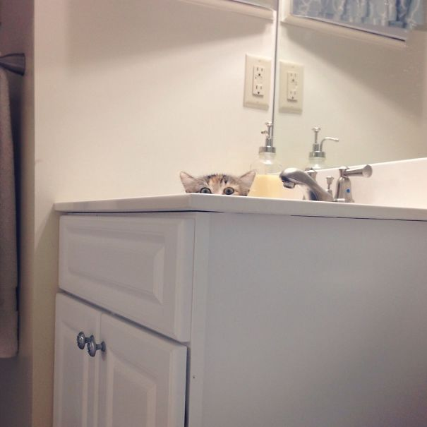 My Friend Caught Her Cat Spying On Her During Her Shower