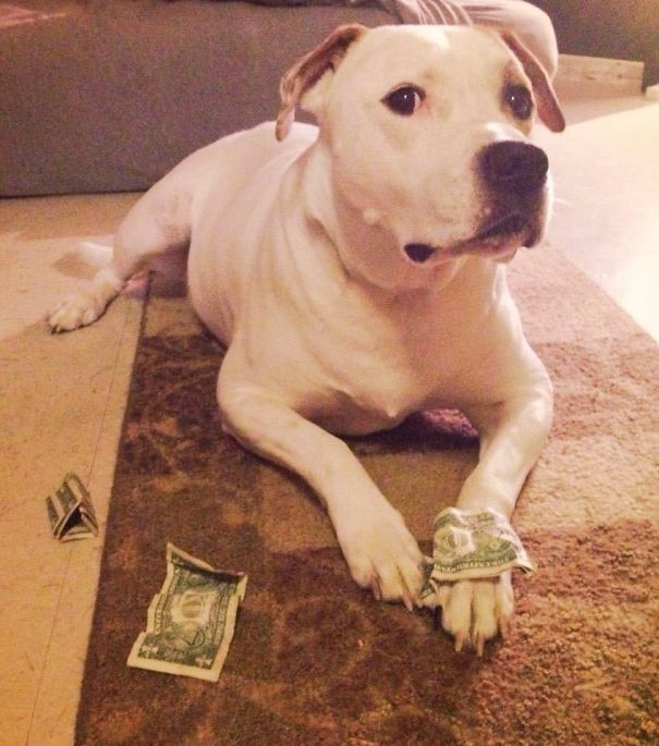 I Caught Him Stealing My Money
