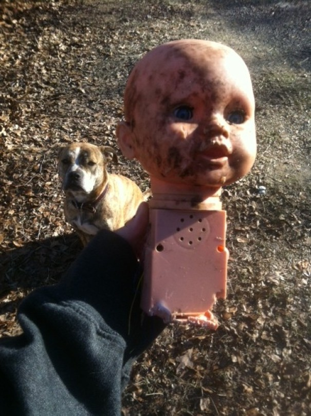 So Recently My Dogs Developed A Bad Habit Of Stealing Dog Toys Out Of Our Neighbor's Yards. Today I Found This-- Nightmare Fuel