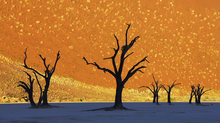This Is Not A Painting: Namib-Naukluft National Park, Namibia
