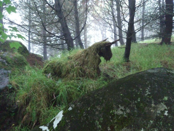Old Tree Stump With Grass Growing Over It On The Faroe Islands Kind Of Looks Like A Unicorn