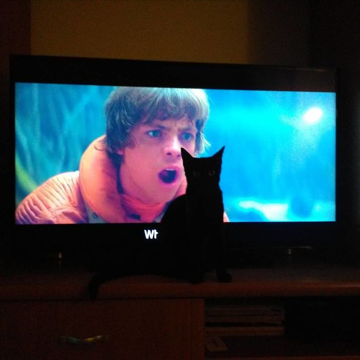My Cat Zuzi Loves To Stay In Front Of The Tv