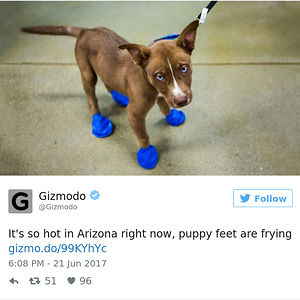 Puppy Feet Are Frying
