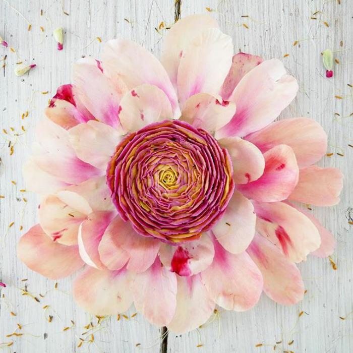 Floral vegano Cake