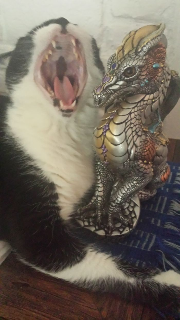 Bast (the Cat) Is Either Singing To The Dragon, Taking Lessons On How To Roar, Or Showing The Dragon How It Is Done.