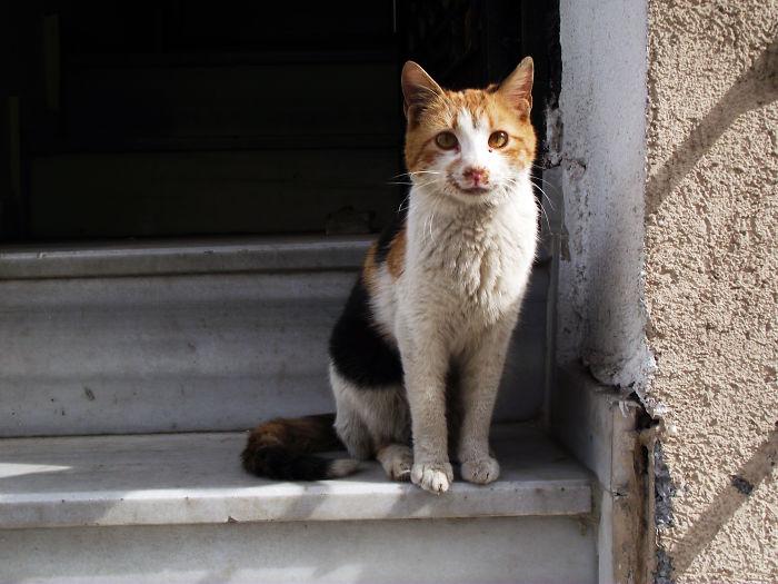 Istanbul Cat 2