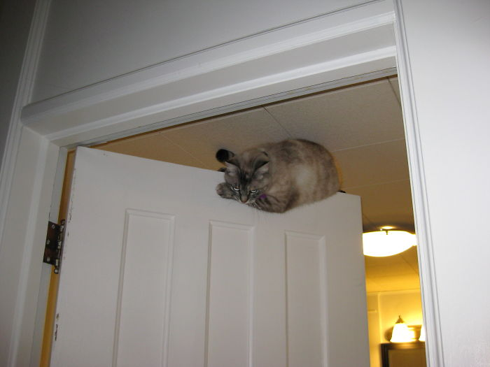Sometimes My Cat Likes Hanging Out On Top Of Doors