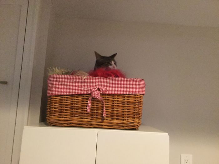 So My Cat Hopped Up Here And Was Spying On Me… Found Out She Was There When She Couldn't Get Down