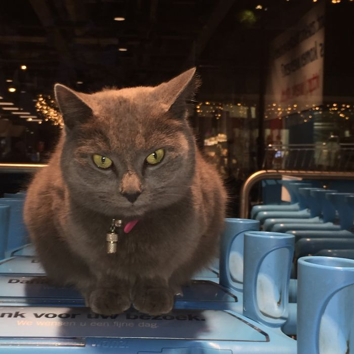 This Cat Likes To Spend His Days In The Supermarket