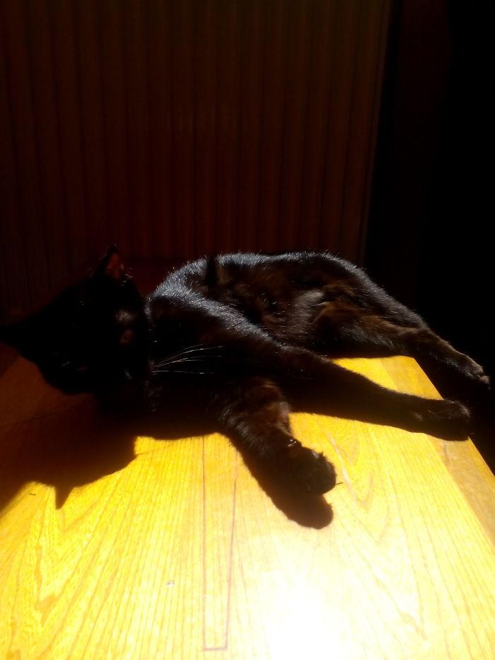 My Shadowcat In The Sunlight