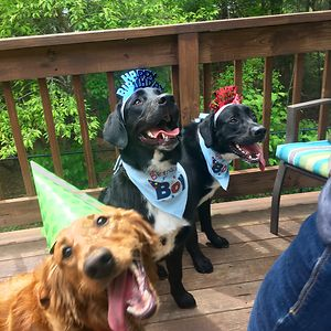 Celebrating Their 1st Birthday. My Dog Is The Photogenic One. Can You Tell?