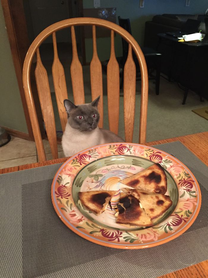 My Cat Wanted My Quesadillas