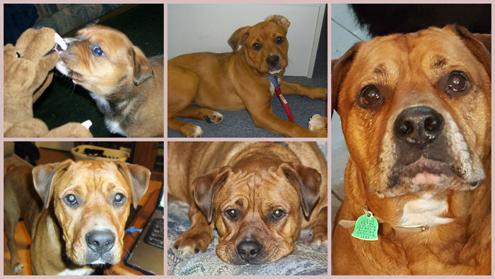 9 Years Of Kali (including The Awkward Adolescent Years)