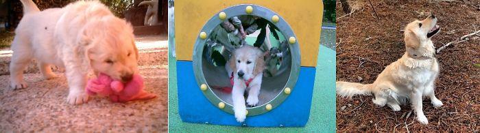 My Dog Perla Through The Years