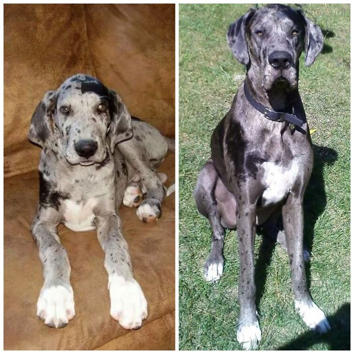 Charlie 3 Months / 3 Years
