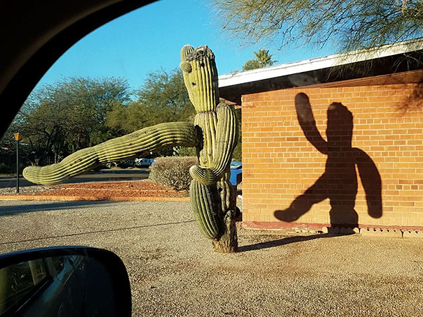 Dancing Cactus Shadow