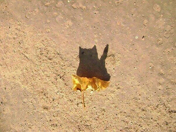 A Shadow Of A Fallen Leaf Looks Like A Cat