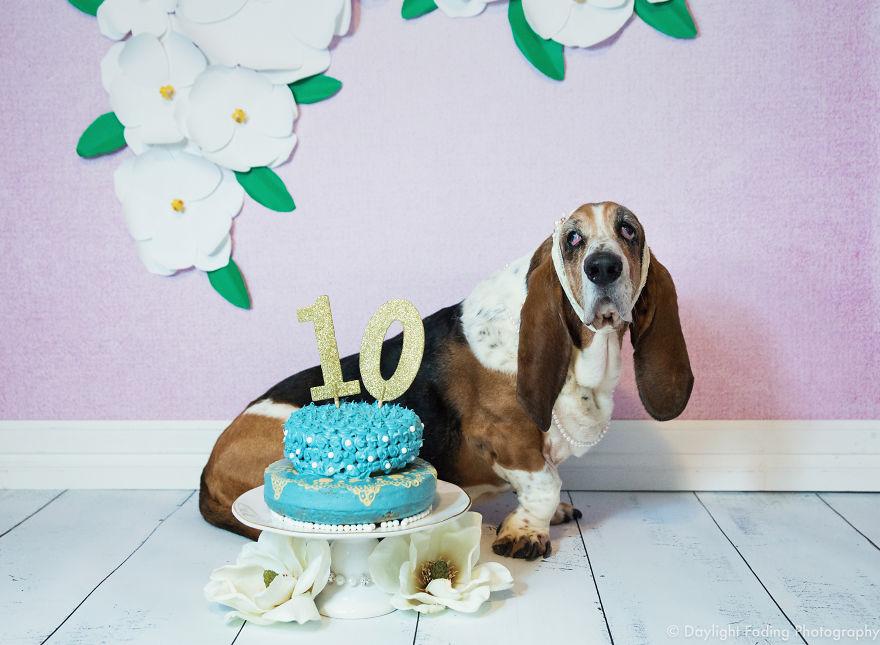 Dog Smashed Birthday Cake