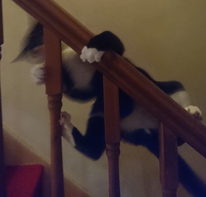 He Often Goes Upstairs By Climbing The Banister More Than Using The Actual Stairs