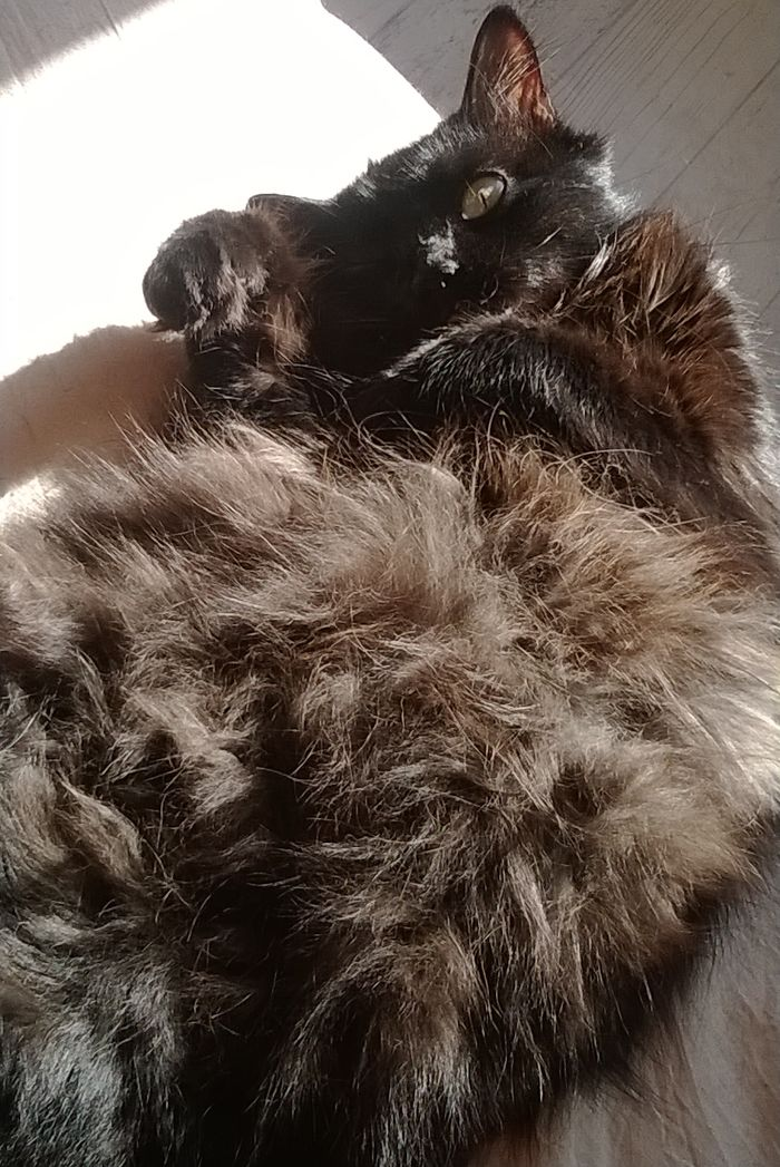 The Sun On My Belly