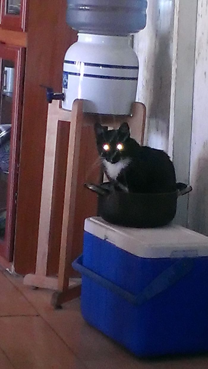 My Cat Likes To Be Inside This Old Pot