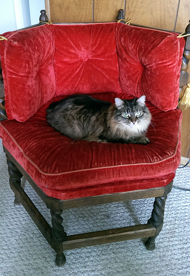 My Wife Is Still Calling The Cat Throne She Found At The Thrift Store A 'Chair'