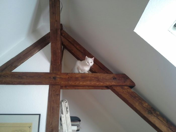 He Went Up There Himself And Cried Because He Wasn't Able To Get Down