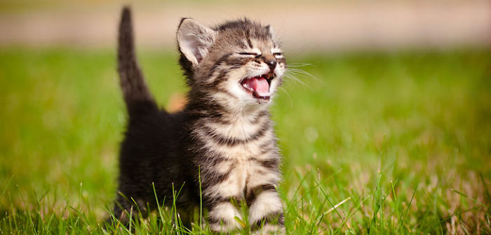 These Cute Af Kittens Will Help You Get Through Your Day