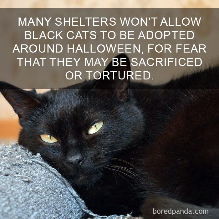 Cat Fact