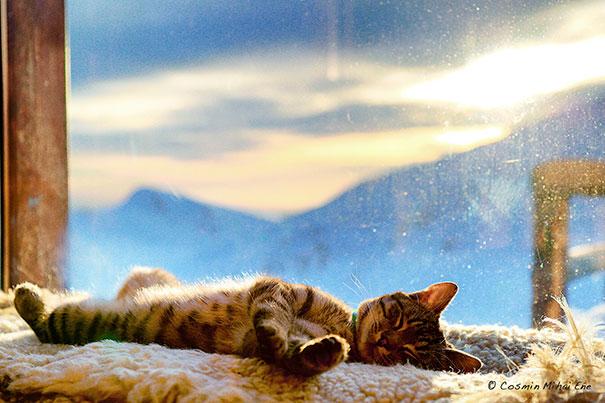 Sleepy Cat Tanning At 2000m Altitude