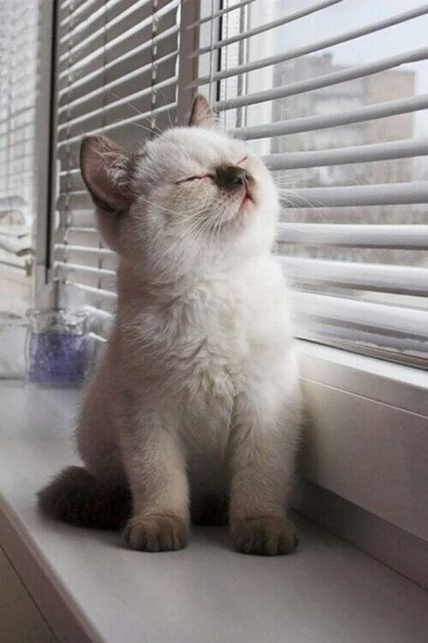 Greeting The Sun