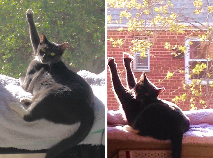 My Boyfriend's Cat Likes To Worship The Sun By Giving High-fives With One Or Both Paws