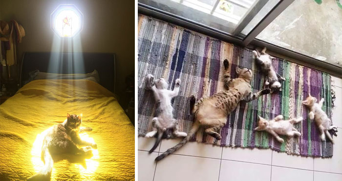 10+ Cats Who Love Sun More Than Anything