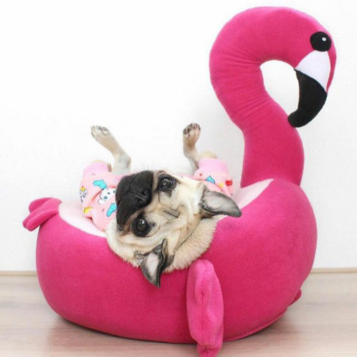 These Pugs Have The Hardest Job