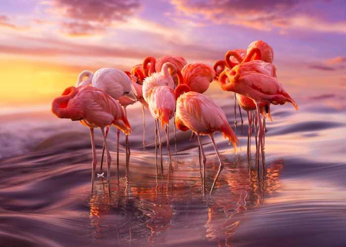 10+ Gorgeous Flamingo Pics To Celebrate Pink Flamingo Day