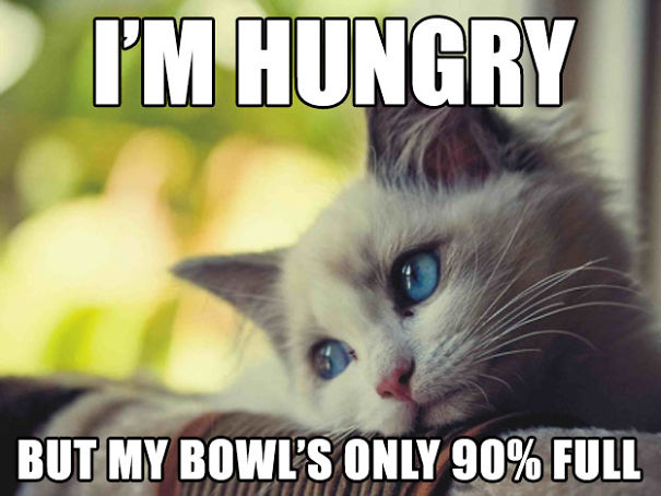 Hilariously Heartbreaking First World Cat Problems That We - 12 heartbreaking first world cat problems