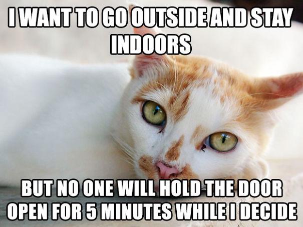 Cat Problem