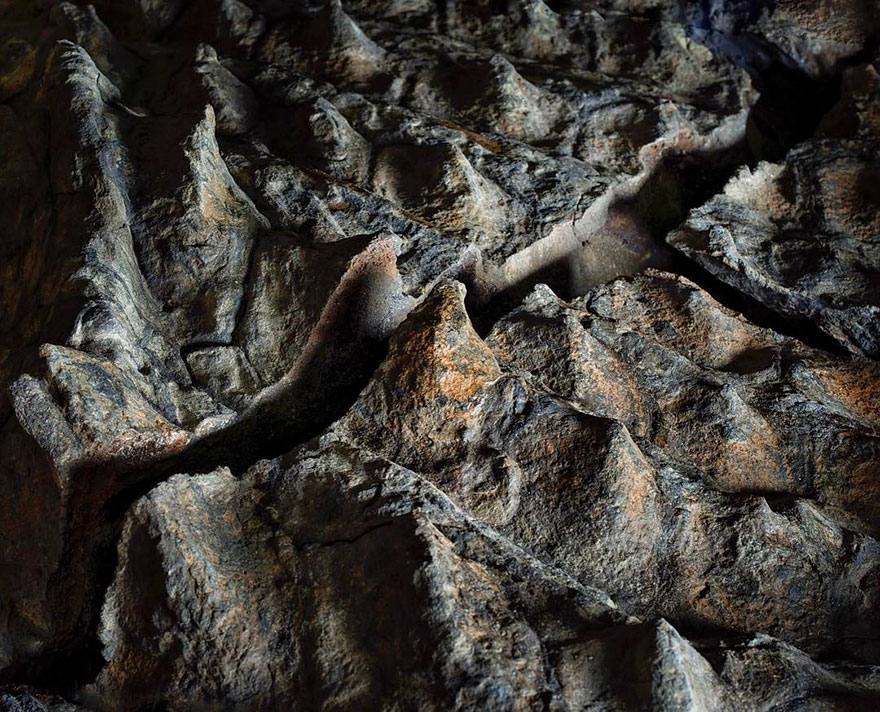 dinosaur-nodosaur-fossil-discovery-5